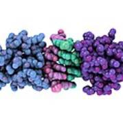 Rna-editing Enzyme, Molecular Model Art Print