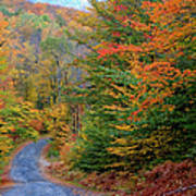 Road Through Autumn Woods Art Print by Larry Landolfi and Photo Researchers