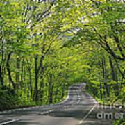 Road To Gatlinburg Tn Art Print by Elizabeth Coats