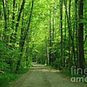 Road To Jasper Woods Art Print