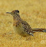 Roadrunner Hen Art Print