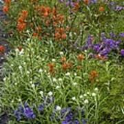 Roadside Flowers, Cascade Mountains, Usa Art Print