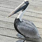 Robbie's Pelican Art Print