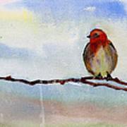 Robin 1 Art Print by Anil Nene