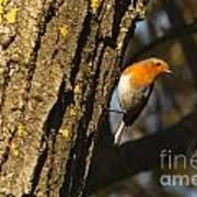 Robin On Tree Art Print