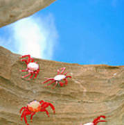 Rock Lobster Art Print
