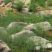Rocks And Grass At Amidon Conservation Area Missouri Art Print