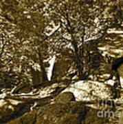 Rocks And Trees 1 Sepia Art Print