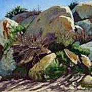 Rocks And Weeds II Art Print