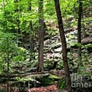 Rocky Forest Of Chatfield Art Print
