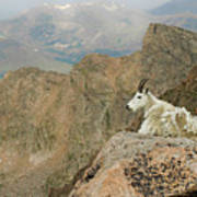Rocky Mountain Goat Art Print