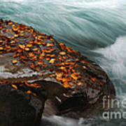 Rocky Mountain Stream Art Print