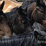 Rodeo Bucking Stock Art Print