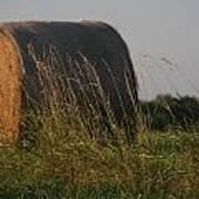 Rolled Bales Of Hay Art Print