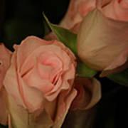 Romance In Pink Art Print