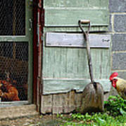 Rooster And Hens Art Print