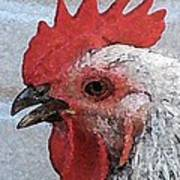 Rooster No. 2 Art Print