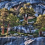 Rooted In Solid Rock Art Print