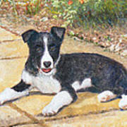 Rory Border Collie Puppy Art Print by Richard James Digance