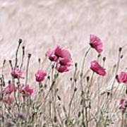 Pink Poppy Field  Art Print