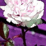 Rose 108 Art Print