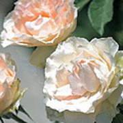 Rose 125 Art Print