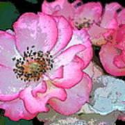 Rose 129 Art Print by Pamela Cooper