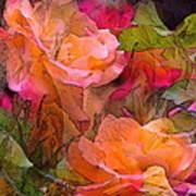 Rose 146 Art Print by Pamela Cooper