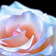 Rose 158 Art Print