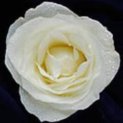 Rose 45 Art Print