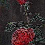Rose 85 Art Print