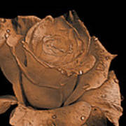 Rose Art  Sepia Art Print
