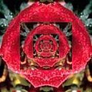 Rose Cut Art Print