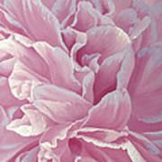 Rose Dream Art Print