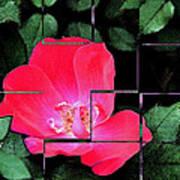 Rose Interrupted Art Print