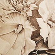 Rose Of Sharon Art Print by Yvonne Scott