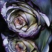Rose Reflection 2 Art Print