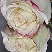 Rose Reflection Art Print