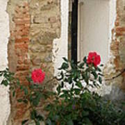 Roses And Antiquity  Art Print