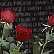 Roses Glow Against The Black Granite Art Print