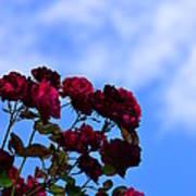 Roses In The Sky Art Print
