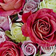 Roses Roses Art Print
