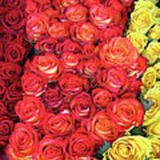 Roses Roses Roses Art Print