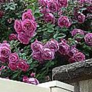 Rosiage Art Print