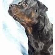 Rottweiler 923 Art Print