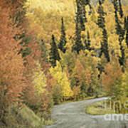 Routt National Forest Art Print
