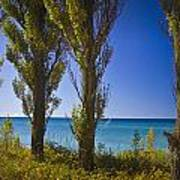 Row Of Cypress Trees At Point Betsie In Michigan No.0924 Art Print