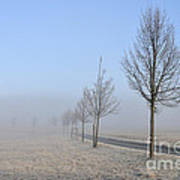 Row Of Trees In The Morning Art Print