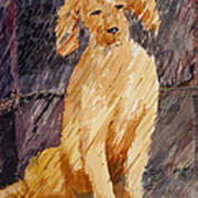 Rudy In The Rain Art Print