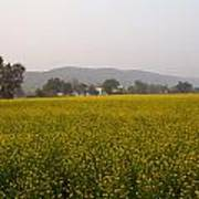 Rural Landscape With A Field Of Mustard Art Print